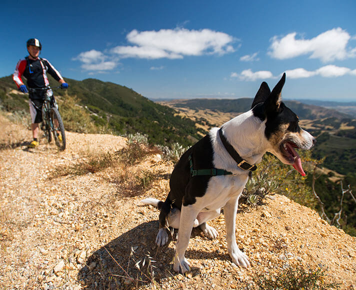 Dog looks out over San Luis Obispo County