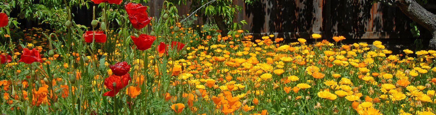 Superieur San Luis Obispo Botanical Garden