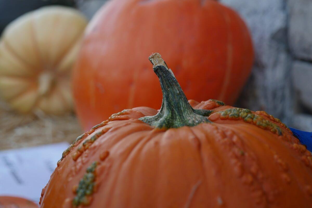 Pumpkins in San Luis Obispo