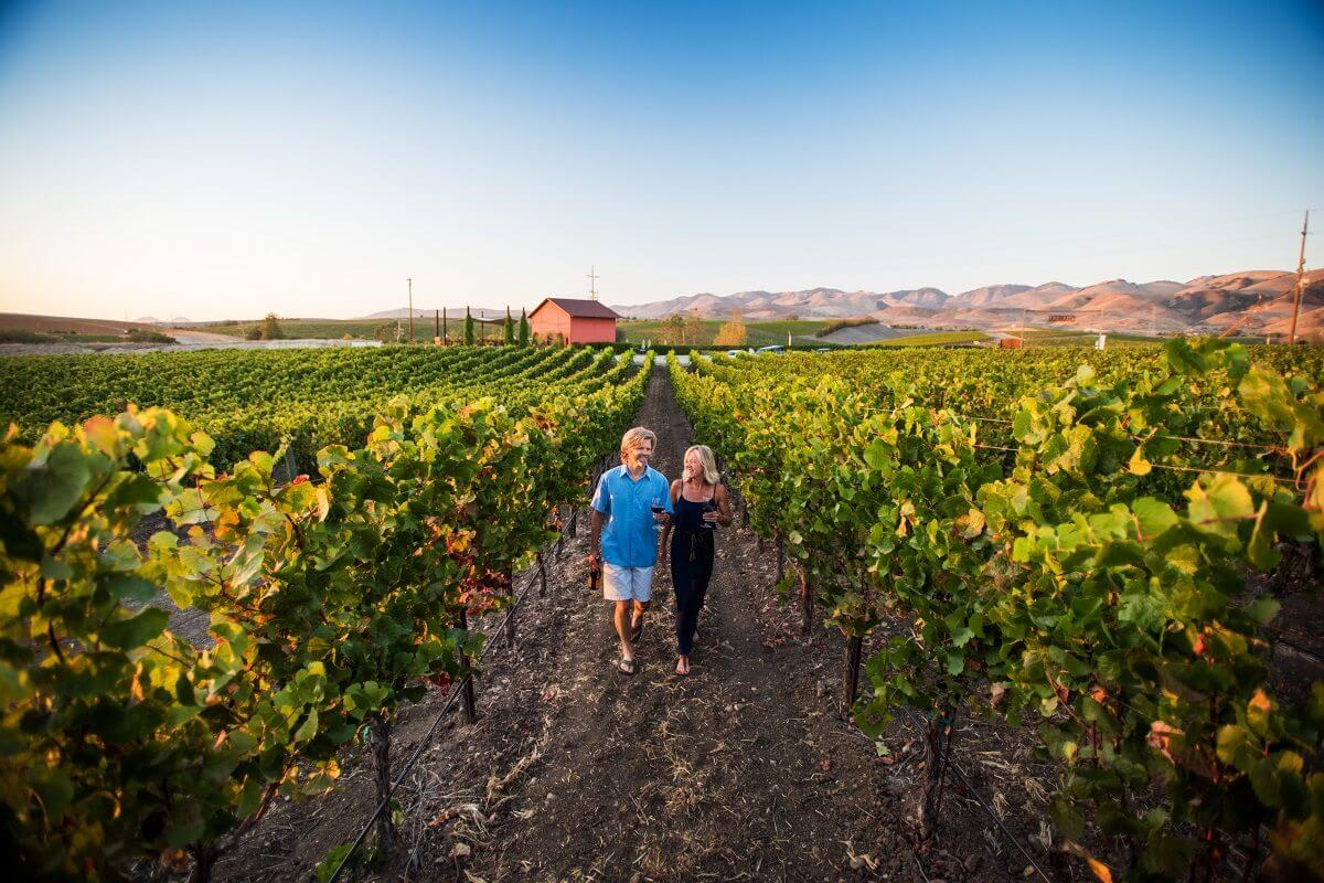 A couple exploring a vineyard in San Luis Obispo