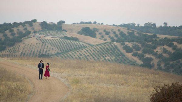Destination Wedding Vineyard