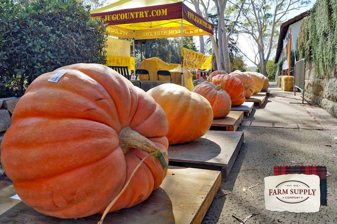 13th Annual Great Pumpkin & Scarecrow Contest