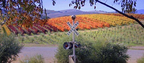 Pomar Junction vineyards