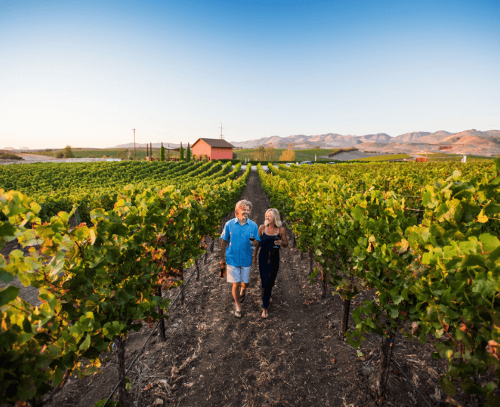 Couple walking through vineyards in San Luis Obispo