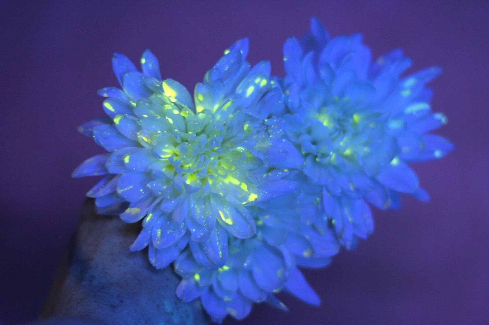 Glow in the Dark Mums and Daisies at SLO Childrens Museum