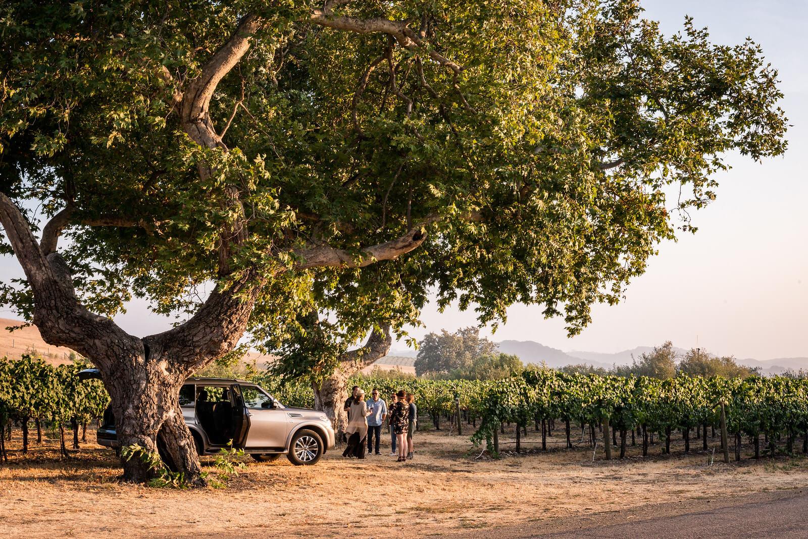 Vineyard Excursion Tolosa San Luis Obispo