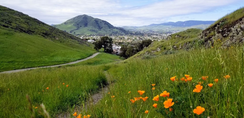 Lush, green, grassy hills with orange poppies in the hills of San Luis Obispo.
