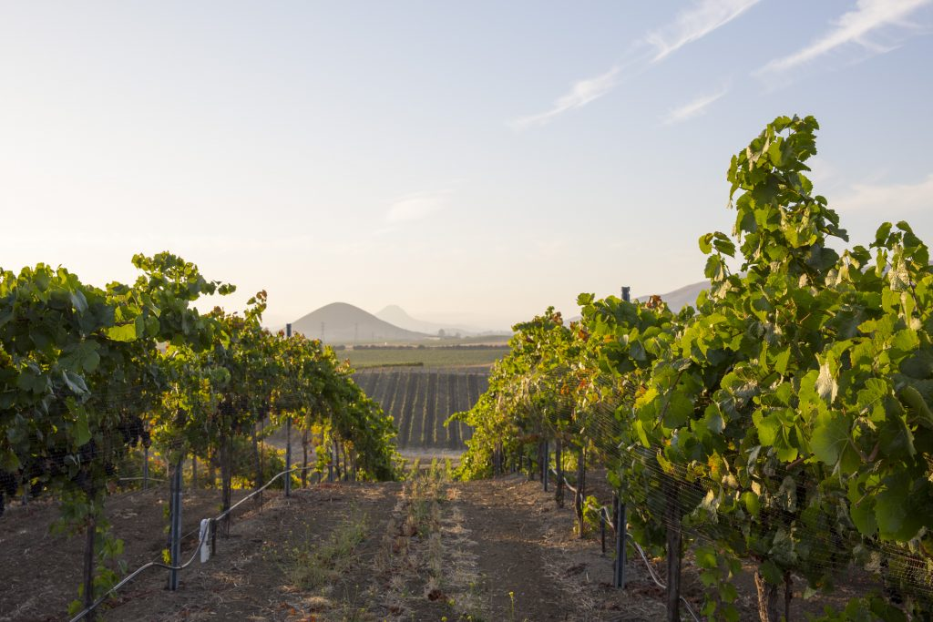 Support Slo Coast Wineries This Wine Wednesday Visit Slo