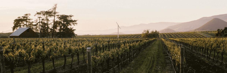 Biddle Ranch Vineyards SLO