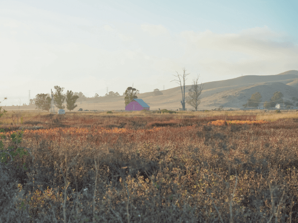 Pink Barn in San Luis Obiso