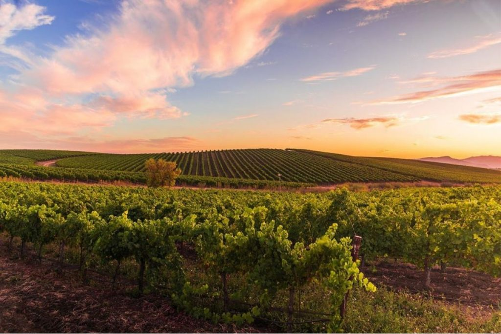 Edna Valley Sunset over the vineyard, taken by @frames_of_mine_photography.