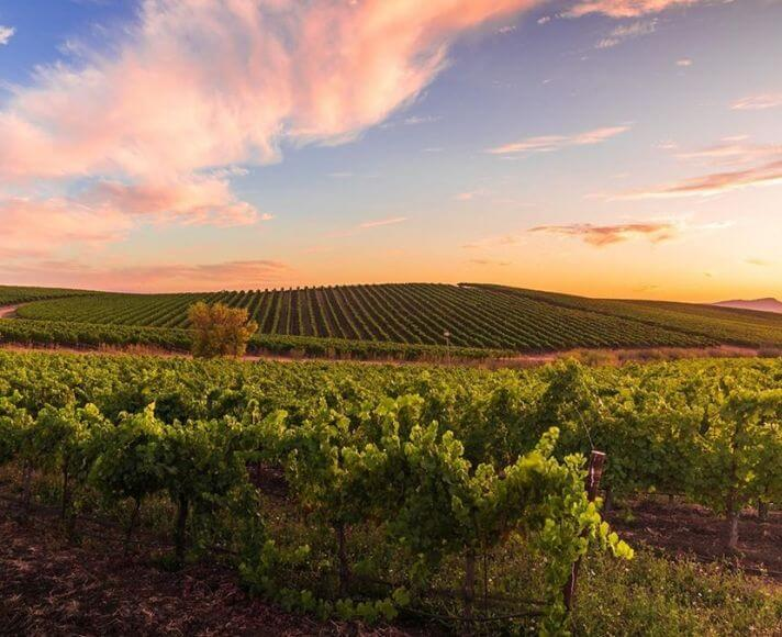 Edna Valley Sunset over the vineyards taken by @frames_of_mine_photography.