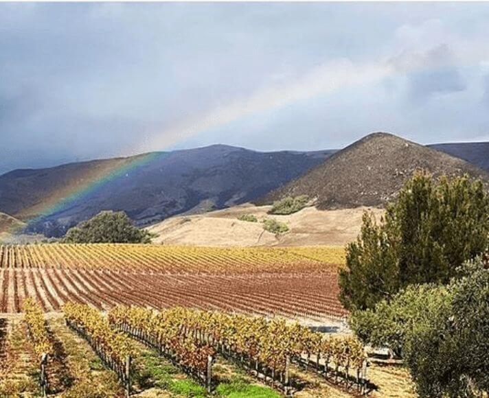 A rainbow over the vineyard at Tolosa Winery in San Luis Obispo.