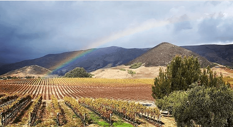 Tolosa Winery's vineyard with a rainbow stretching into the clouds.