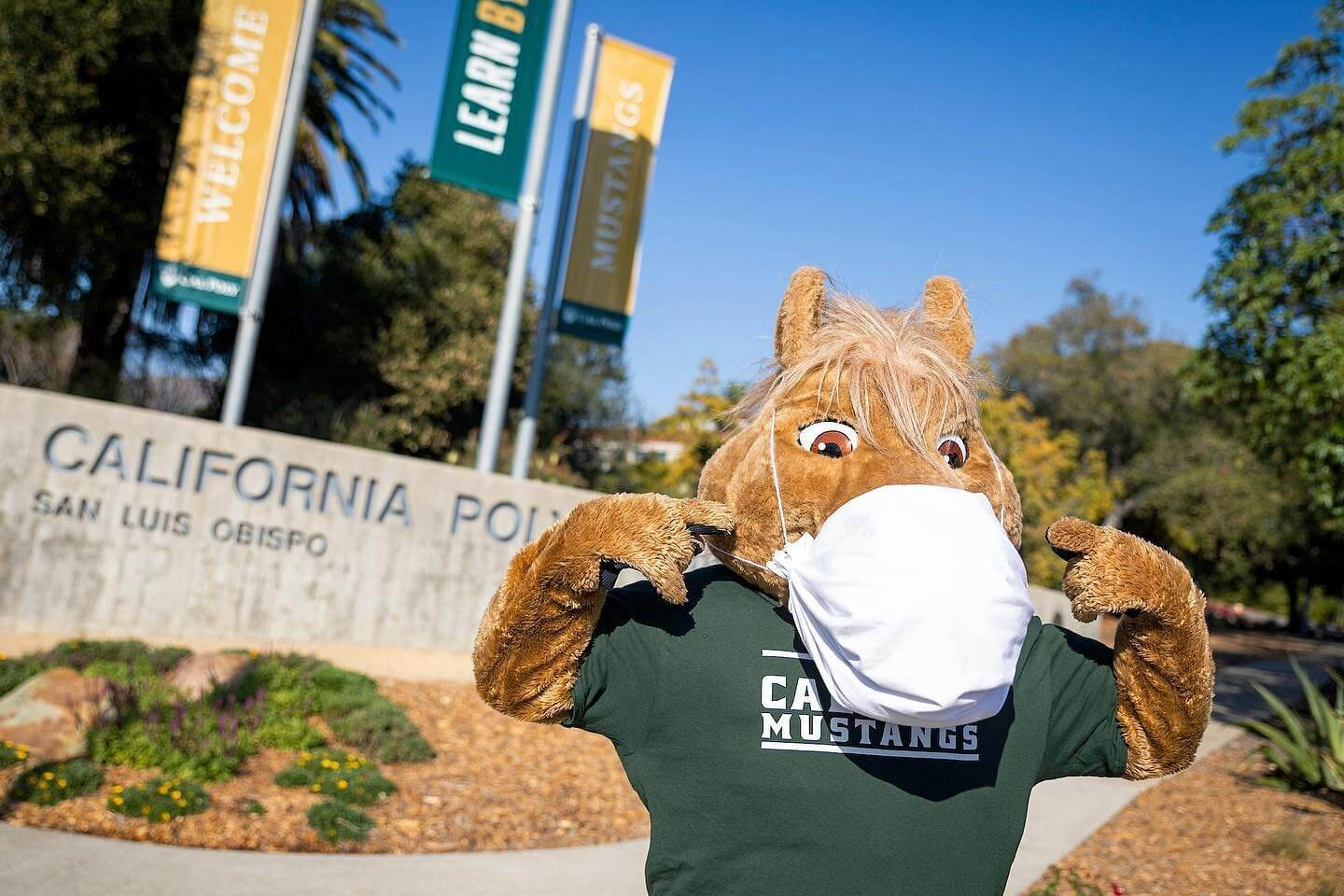 Welcome Back, Cal Poly Mustangs